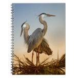 Great Blue Herons at Sunrise Spiral Notebook