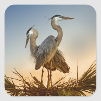 Great Blue Herons at Sunrise Square Sticker
