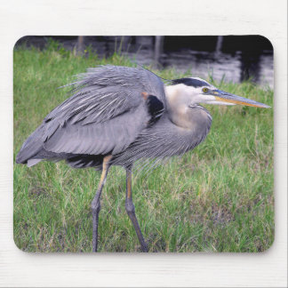 Great Blue Heron's Territory Mouse Pad