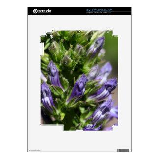 Great Blue Lobelia (Lobelia siphilitica) iPad 2 Skin