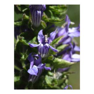 Great Blue Lobelia (Lobelia siphilitica) Letterhead