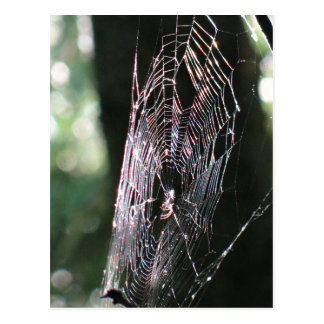 Great colorful spiderweb postcard