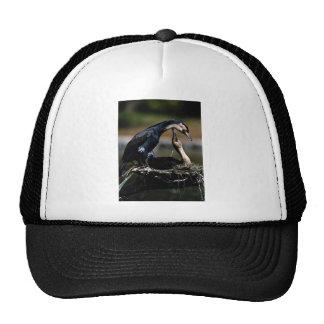 Great cormorant pair, tropical mesh hat
