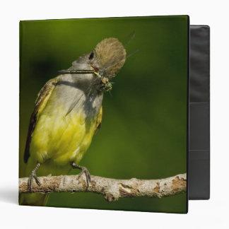 Great Crested Flycatcher eating Vinyl Binder