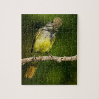 Great Crested Flycatcher eating Jigsaw Puzzle