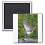 Great-crested Flycatcher Fridge Magnet