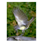 Great-crested Flycatcher Postcard