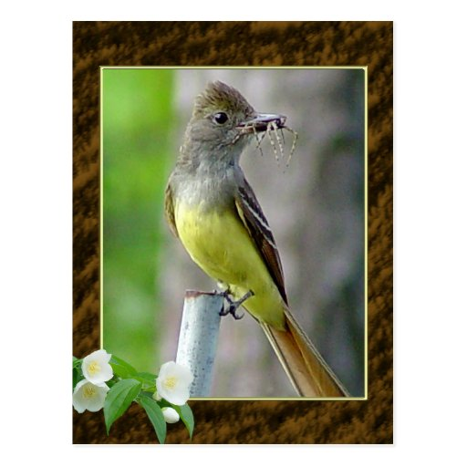 Great Crested Flycatcher Postcard 2