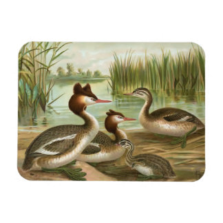 Great Crested Grebe Rectangle Magnets