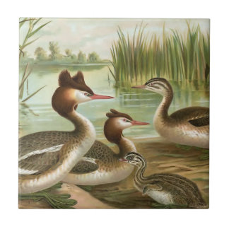 Great Crested Grebe Tile