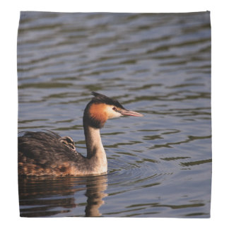 Great crested grebe with chick on back bandana