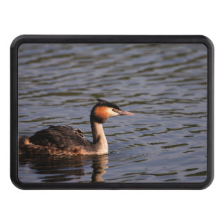 Great crested grebe with chick on back tow hitch cover