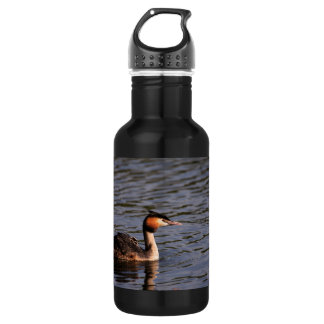 Great crested grebe with chick on back water bottle