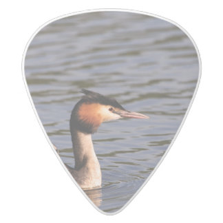 Great crested grebe with chick on back white delrin guitar pick