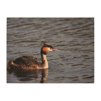 Great crested grebe with chick on back wood print