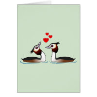 Great Crested Grebes in Love Greeting Card