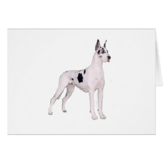 Great Dane (A) - Harlequin standing Greeting Card