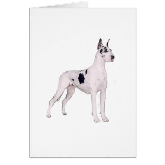 Great Dane (A) - Harlequin standing Cards