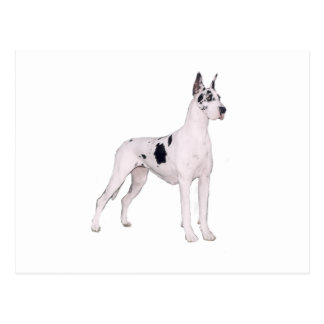 Great Dane (A) - Harlequin standing Post Card