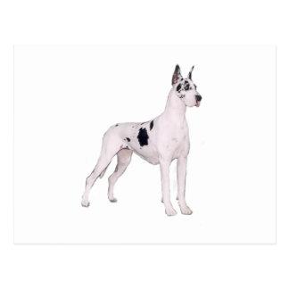 Great Dane (A) - Harlequin standing Postcards