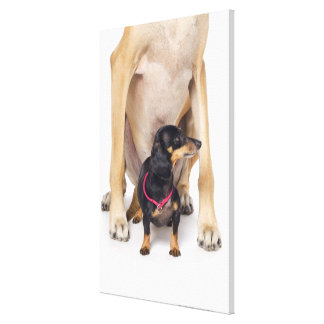 Great Dane and Dachshund portrait Canvas Print