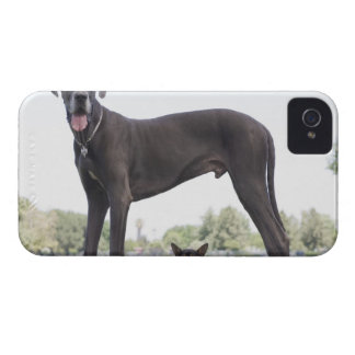 Great dane and small mixed-breed dog iPhone 4 covers