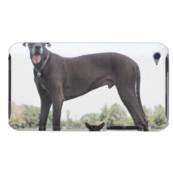 Case-Mate iPod Touch Barely There Case with Great Dane Phone Cases design