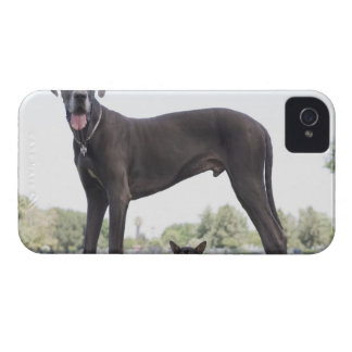 Great dane and small mixed-breed dog iPhone 4 cover