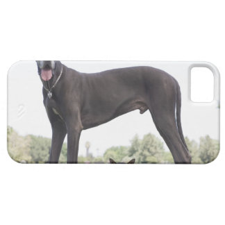 Great dane and small mixed-breed dog iPhone SE/5/5s case