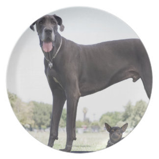 Great dane and small mixed-breed dog melamine plate