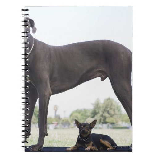 Great dane and small mixed-breed dog notebooks