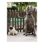Great dane azul y perros del barro amasado en los postal