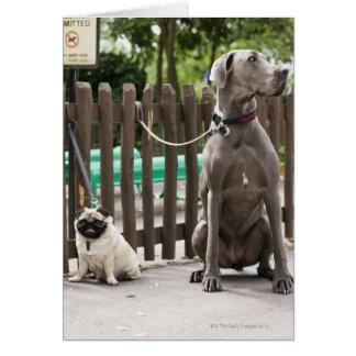 Great dane azul y perros del barro amasado en los tarjeta de felicitación