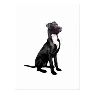 Great Dane (B) - Black (natural eared) Postcards