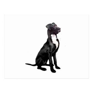 Great Dane (B) - Black (natural eared) Post Cards