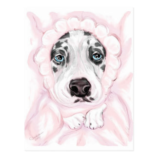 Great Dane Baby Harlequin Girl Postcard
