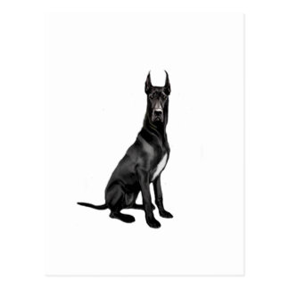 Great Dane - Black (cropped ears) Post Cards