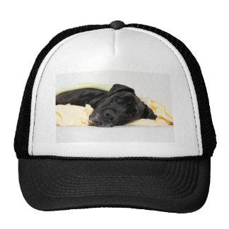 Great Dane - black Dogge Alemán - negro Gorra