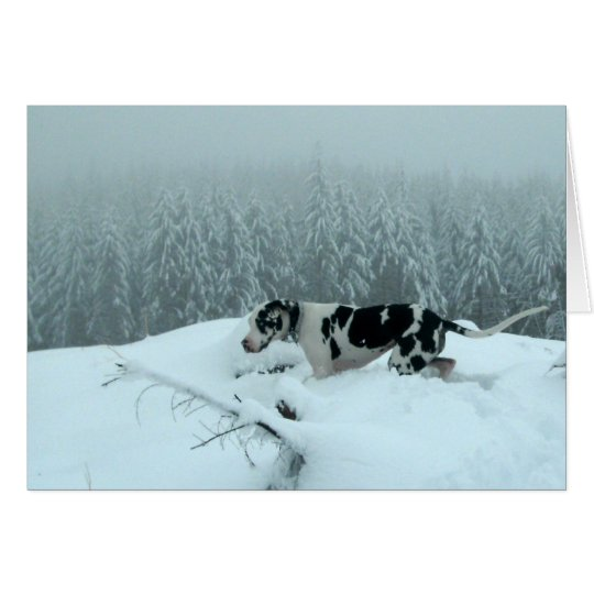 """Great Dane """"Cash"""" In The Snow Card"""