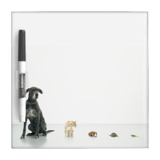Great Dane, cat, guinea pig, tortoise and slug Dry-Erase Board