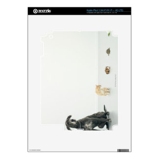 Great Dane, cat, guinea pig, tortoise and slug iPad 3 Skins