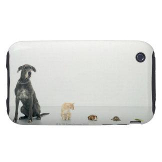 Great Dane, cat, guinea pig, tortoise and slug iPhone 3 Tough Case