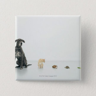 Great Dane, cat, guinea pig, tortoise and slug Pinback Button