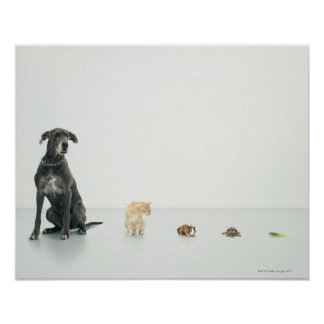 Great Dane, cat, guinea pig, tortoise and slug Poster