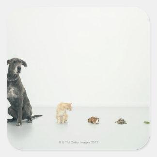 Great Dane, cat, guinea pig, tortoise and slug Square Sticker