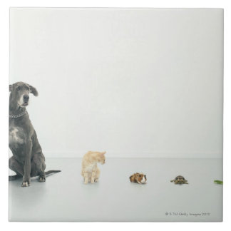Great Dane, cat, guinea pig, tortoise and slug Ceramic Tile