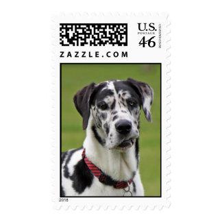 Great Dane dog beautiful photo postage stamp