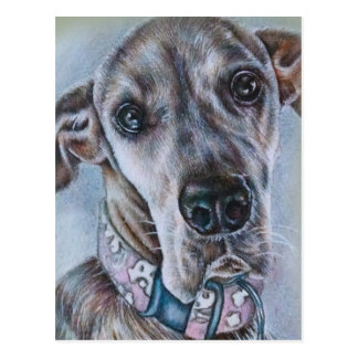 Great Dane Dog Drawing Design Postcard
