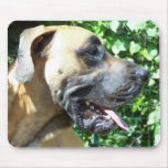 Great Dane Dog Face Profile View Mousepads