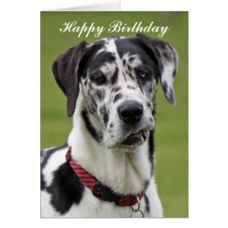 Great Dane dog happy birthday greeting card